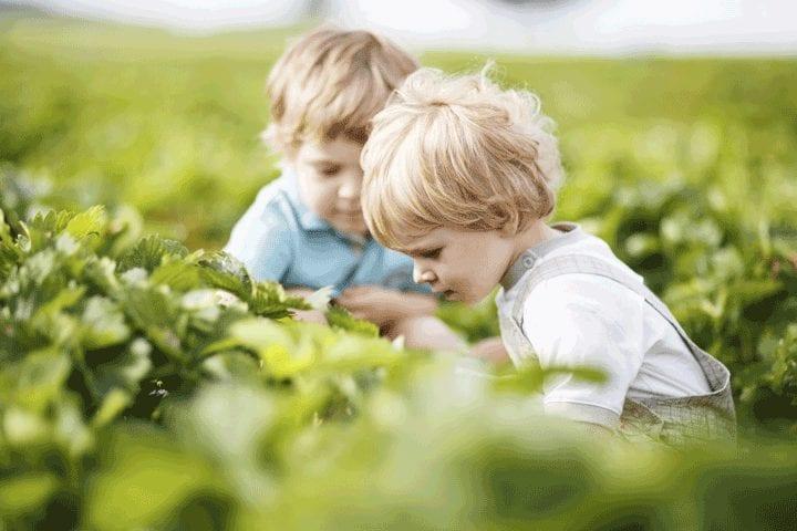 Preparing vegetables your children will love